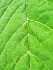 background from the green leaf