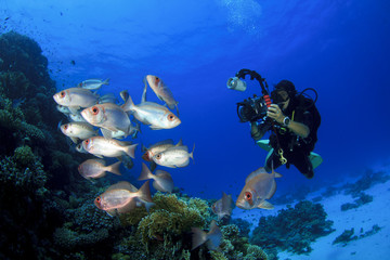 Scuba Diver takes a photo of tropical fish on coral reef