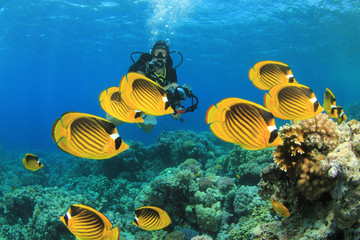 Tropical Fish on coral reef with scuba diver