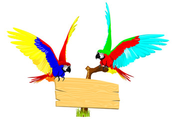 couple macaw bird