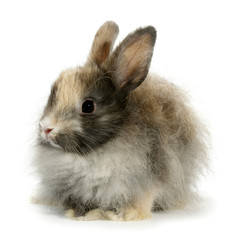Weird rabbit bunny head isolated on white