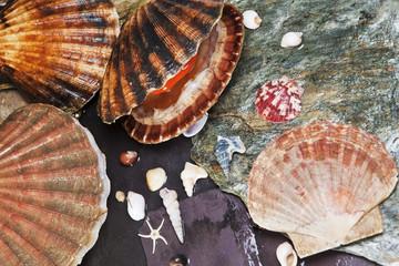 Various seashells on wet stones