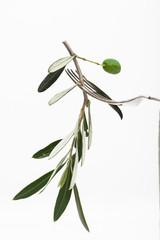 Olivenzweig auf Gabel