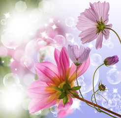 The beautiful decorative spring flowers