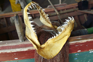 Jaws of a shark.