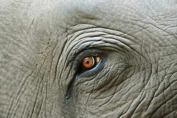 Elephant eye with a tear, detail Wall mural