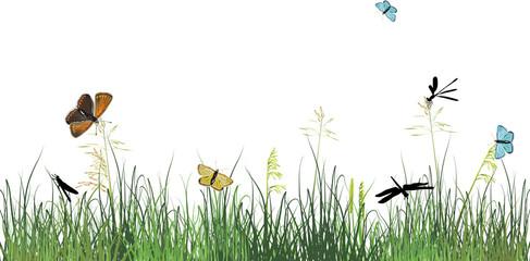 dragonflies and butterflies in green grass