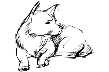 a sketch of home animal dog that lies