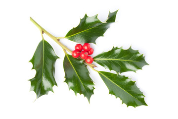 Christmas Holly twig (Ilex) with red berries, isolated on white