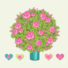 Rose bushes illustration