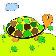 color page tortoise turtle