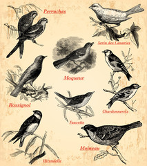 Wall Mural - les oiseaux