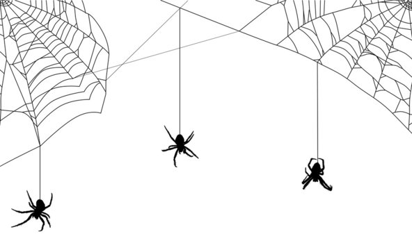 three spiders in black web on white
