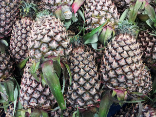 Fresh pineapple fruits
