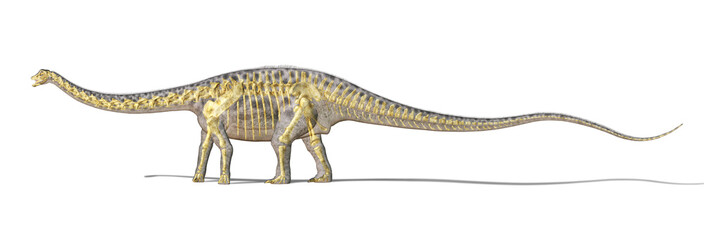Diplodocus dinosaur photo-realistc rendering, with full skeleton