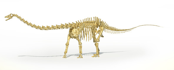 Diplodocus dinosaur full skeleton photo-realistc rendering. Pers