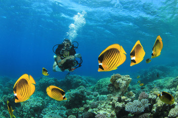 Fish, Coral Reef and Scuba Diver in ocean