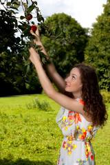 Junge Frau pflückt Apfel