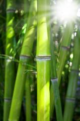 Bambus mit Sonnenschein
