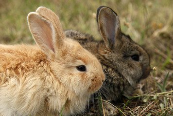 Two rabbits bunnies full frame