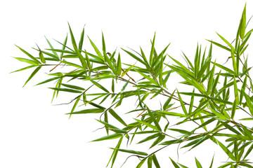 bambou sur fond blanc