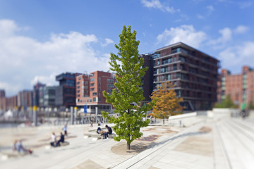 Baum in der Hafencity Hamburg