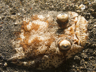 Stargazer fish buried in the sand at bottom of ocean.