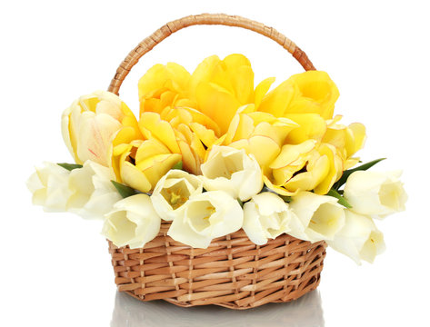 beautiful tulips in basket isolated on white.