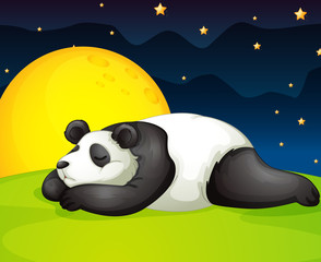 panda resting in night