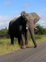 Foto auf Acrylglas Elefant Elefant