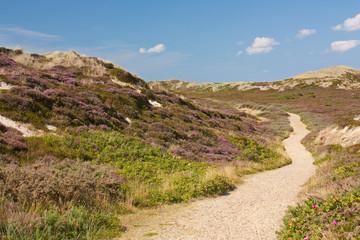 Fototapete - Weg durch Dünenlandschaft auf Sylt bei Kampen mit Heideblüte
