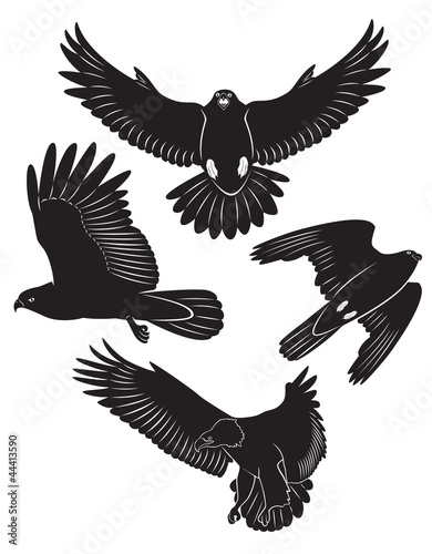 flying falcon graphic