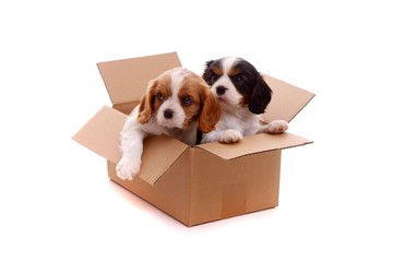 zwei traurige Welpen im Karton
