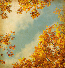 old paper. retro image of Autumn leaves on the sky background