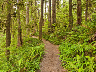 Rain Forest at Olympic National Park