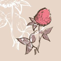 Clover flower illustration