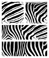 Vector zebra pattern