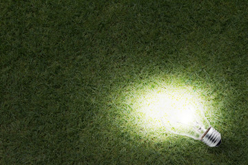 Light Bulb glowing in the grass