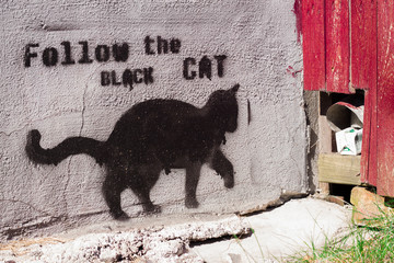 Fototapete - black cat graffiti