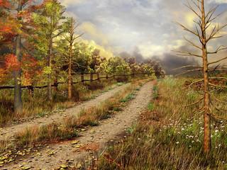 Wall Mural - Jesienny krajobraz z wiejską drogą przez las