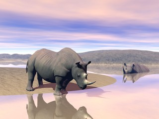 Rhinoceros and water
