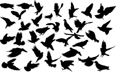 large set of pigeon black silhouettes