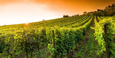 Foto auf Leinwand Weinberg Weingut an der hessischen Bergstraße