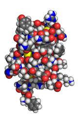 Insulin molecule