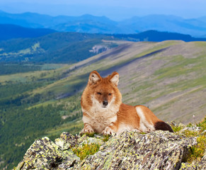 Dhole in windness area