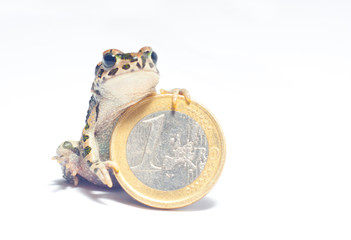 various coins and crazy frog