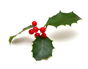 Holly leaf sprig with red berries, isolated over white backgroun