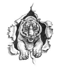 Pencil drawing of a tiger