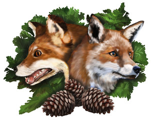 Two foxes on white background