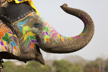 Deurstickers Olifant Decorated elephant at the elephant festival in Jaipur